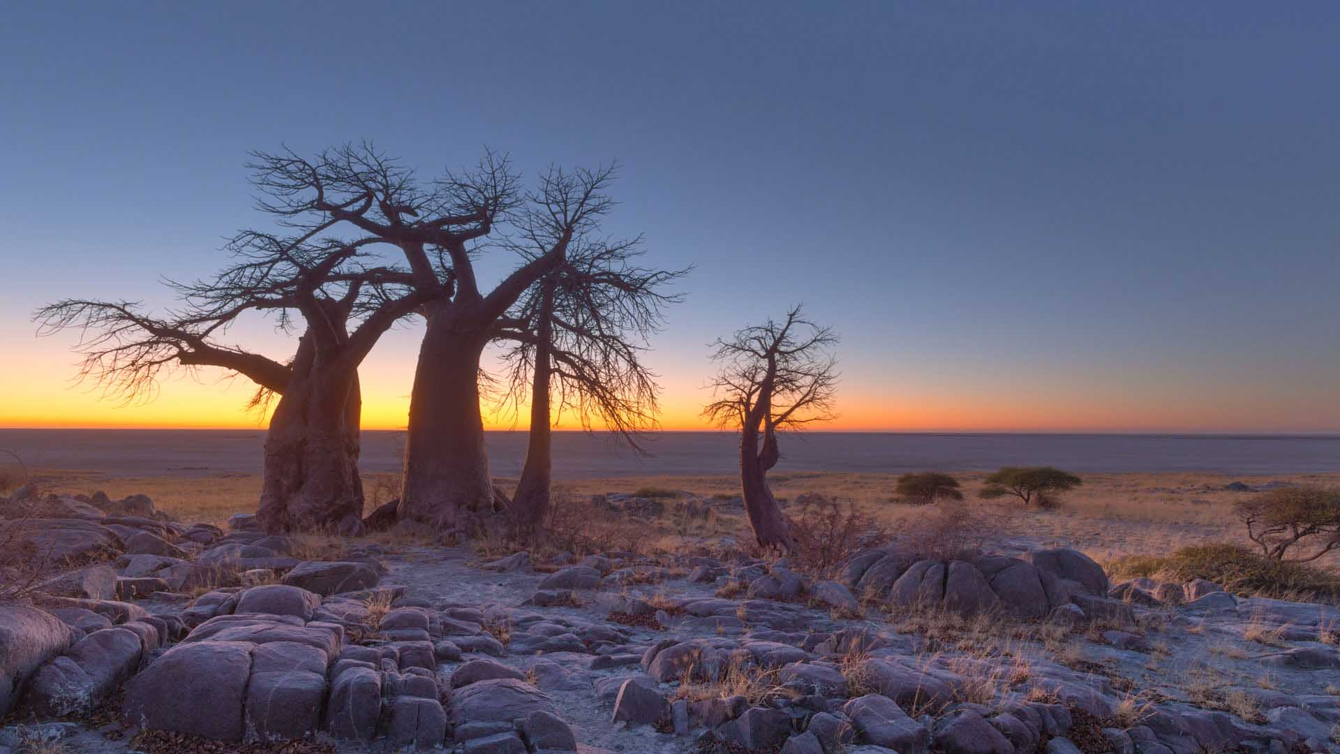 Botswana Wallpapers High Quality Download 1920x1080