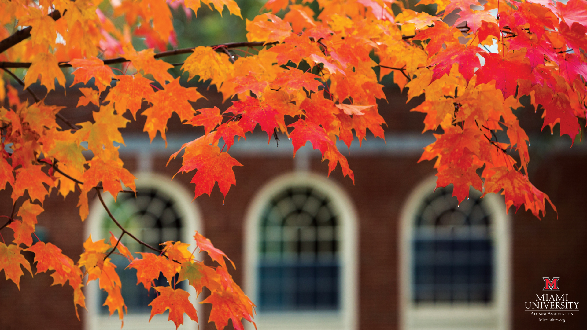 Miami University   Fall wallpaper 1920x1080