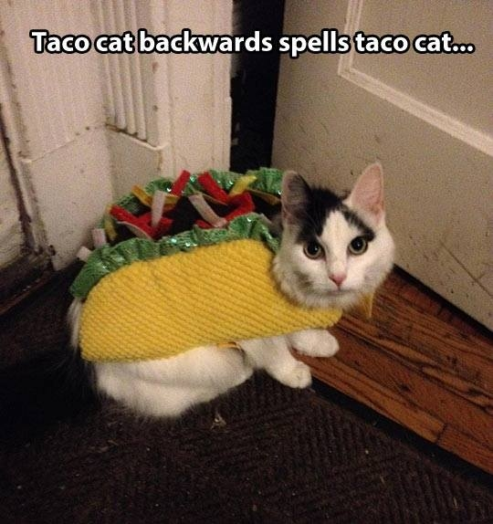 Funny taco cat Funny Dirty Adult Jokes Memes Pictures 540x574