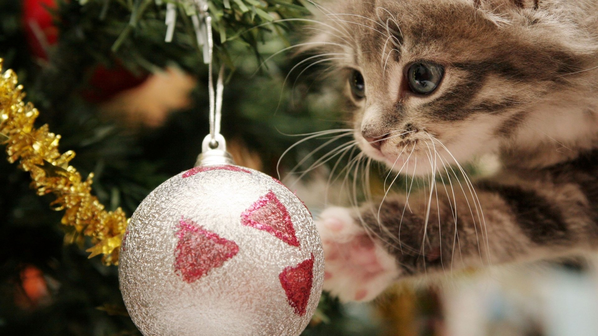 Super Cute Christmas Cat Full HD wallpaper Christmas Ball 1080p 1920x1080