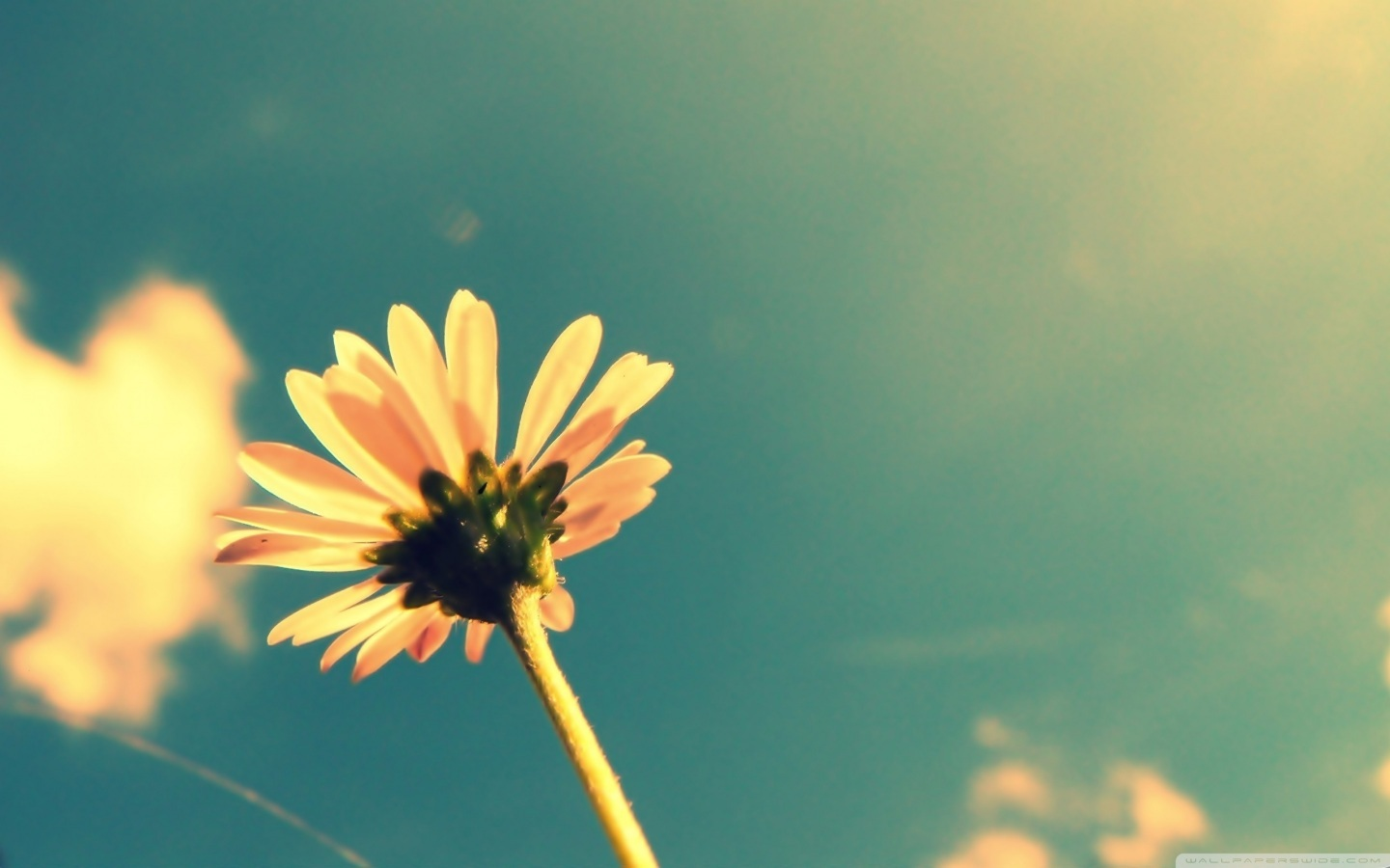Cute Summer Flower Wallpaper Summer Tumblr Photography Photo Shared By 1440x900