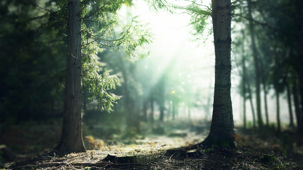Dark Enchanted Forest Background Download