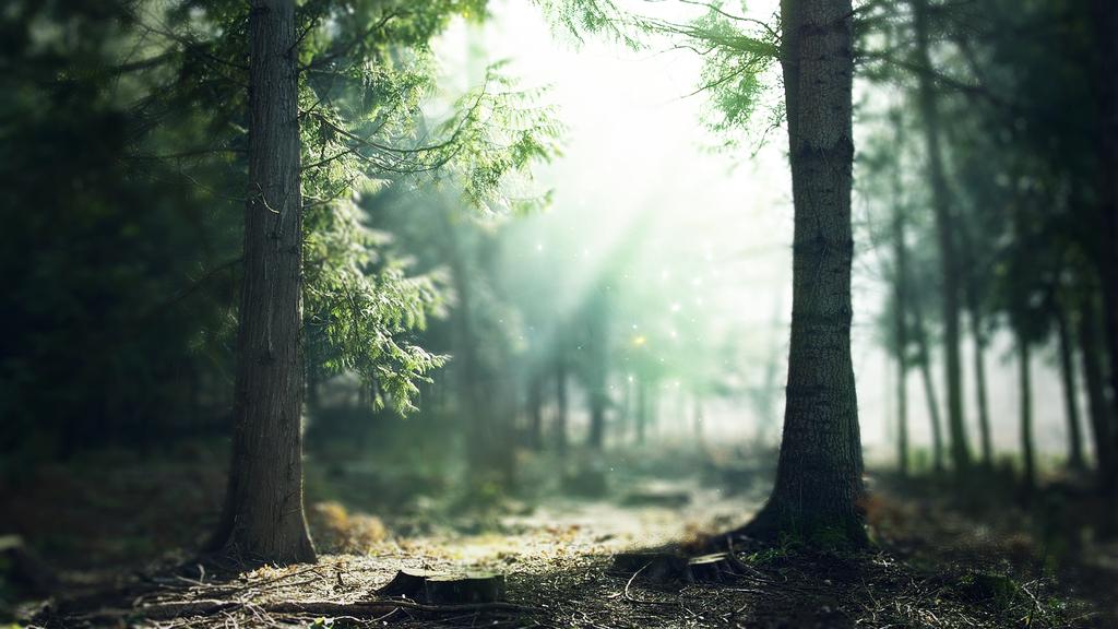 Enchanted Forest Desktop Wallpaper Wallpapersafari