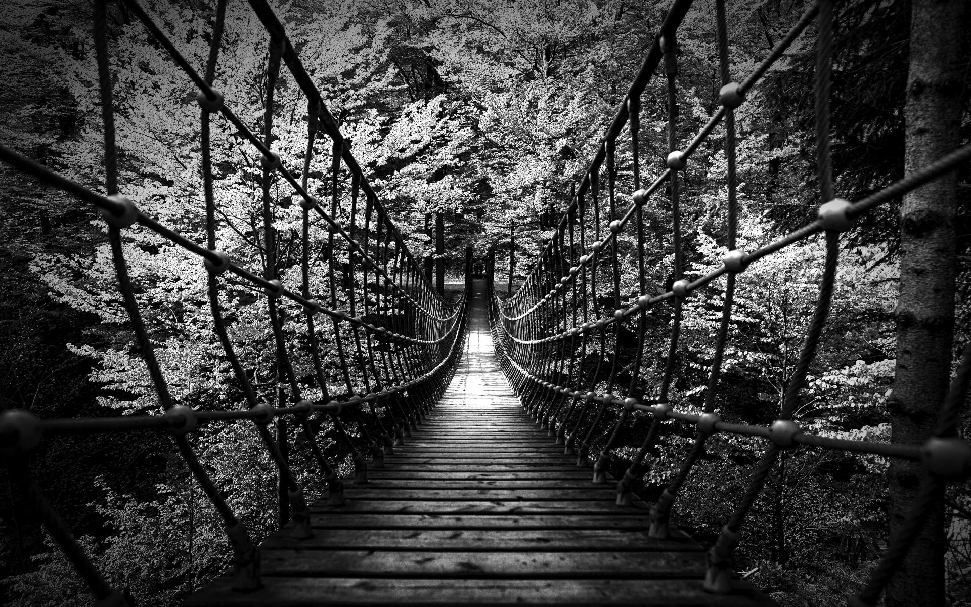 black white bw landscapes nature wood rope scary bridges trees forest 1920x1200