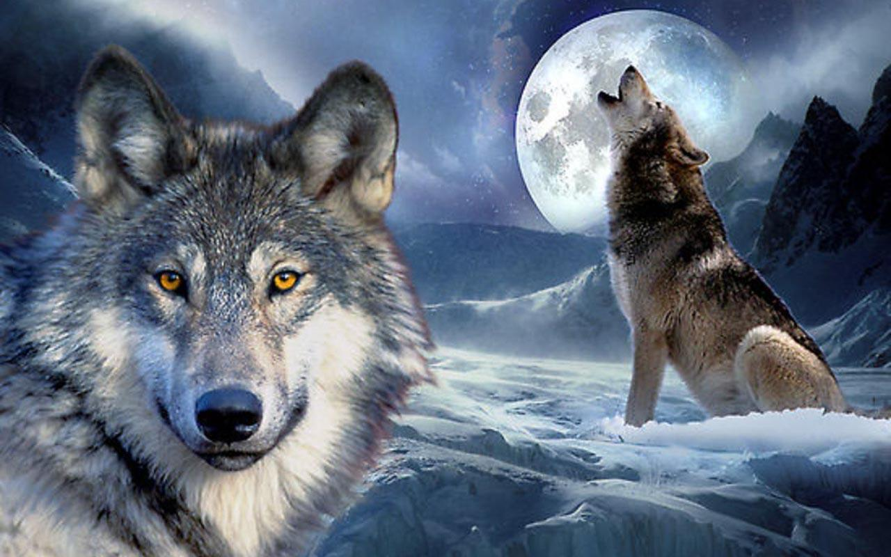 3D Wolf Wallpapers for Android   APK Download 1280x800