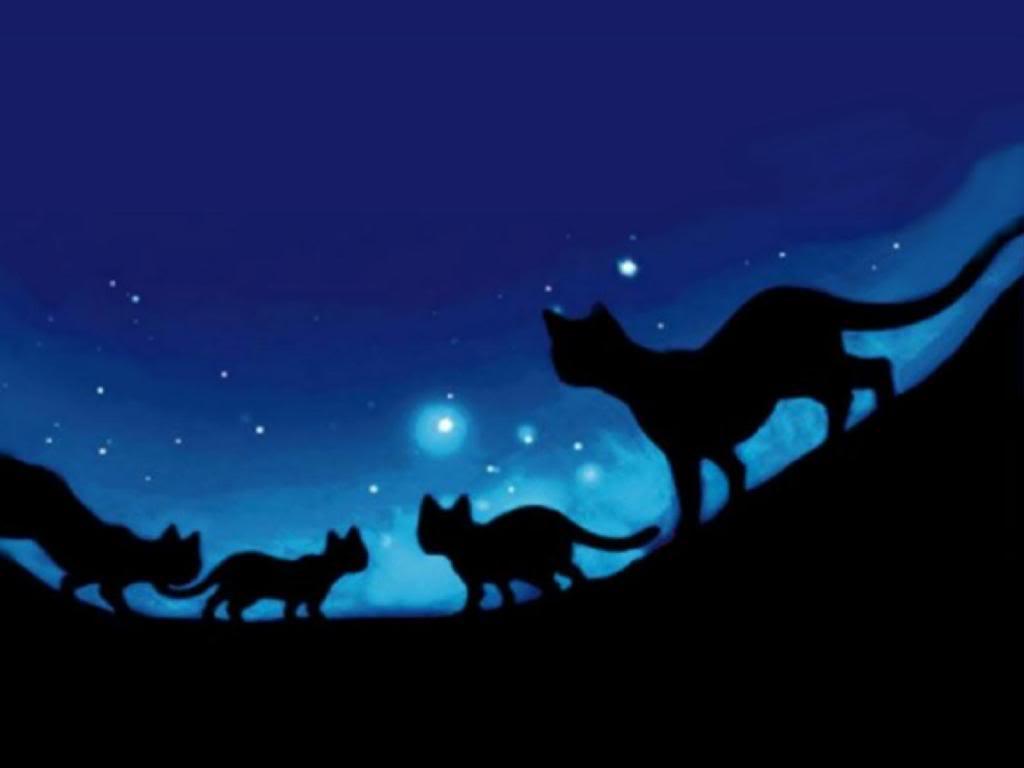Midnight Wallpaper Midnight Desktop Background 1024x768