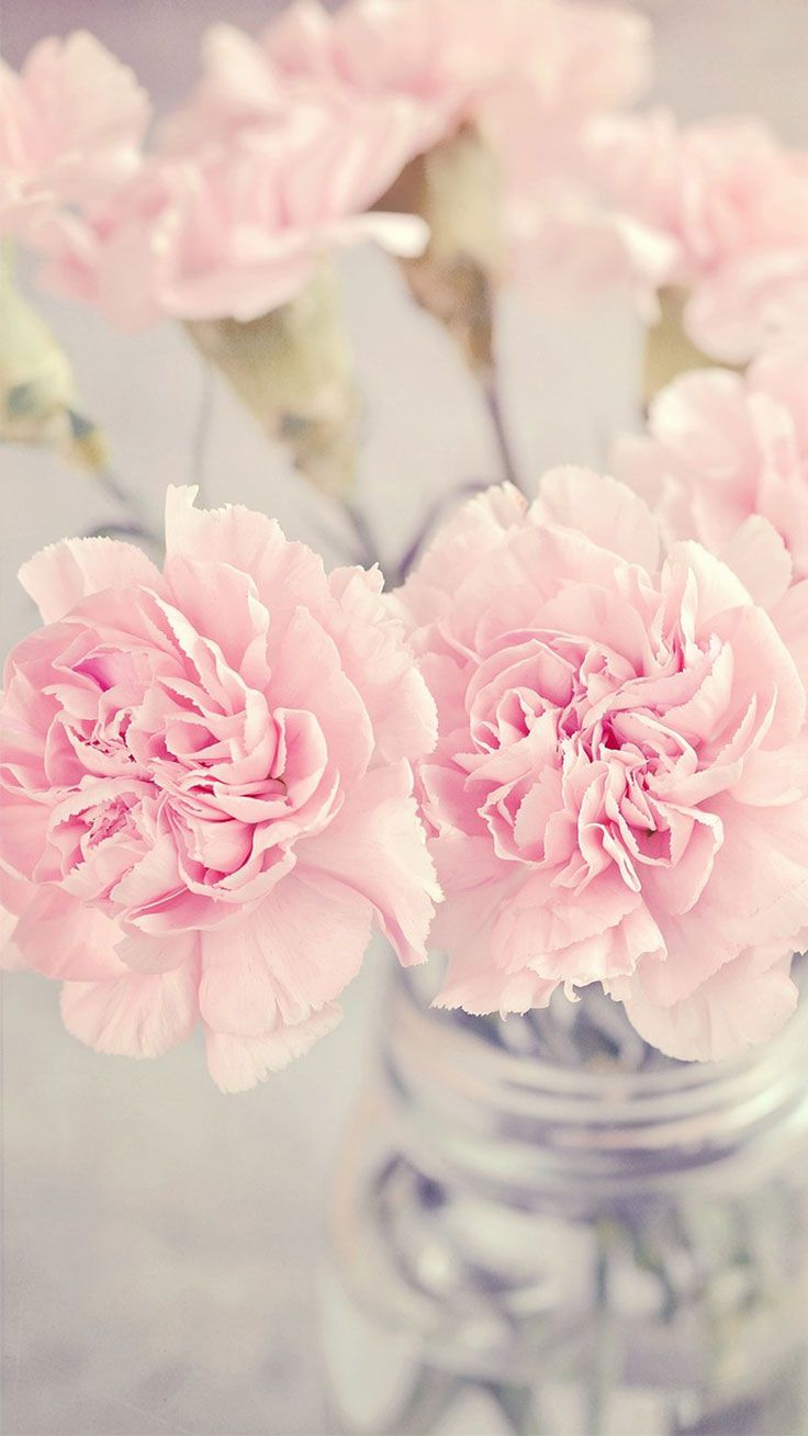 5 Cute Pink Peonies iPhone Wallpapers Preppy Wallpapers Floral 736x1308