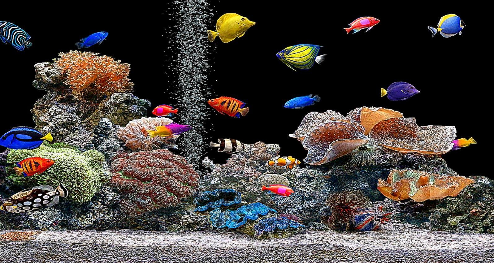 3d aquarium wallpaper wallpapersafari for 3d fish wallpaper