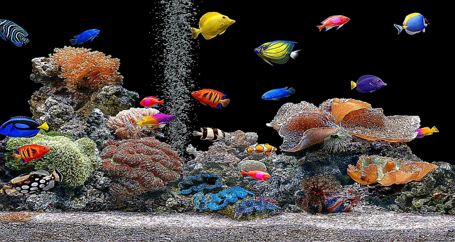 3d aquarium wallpaper wallpapersafari for Desktop fish tank