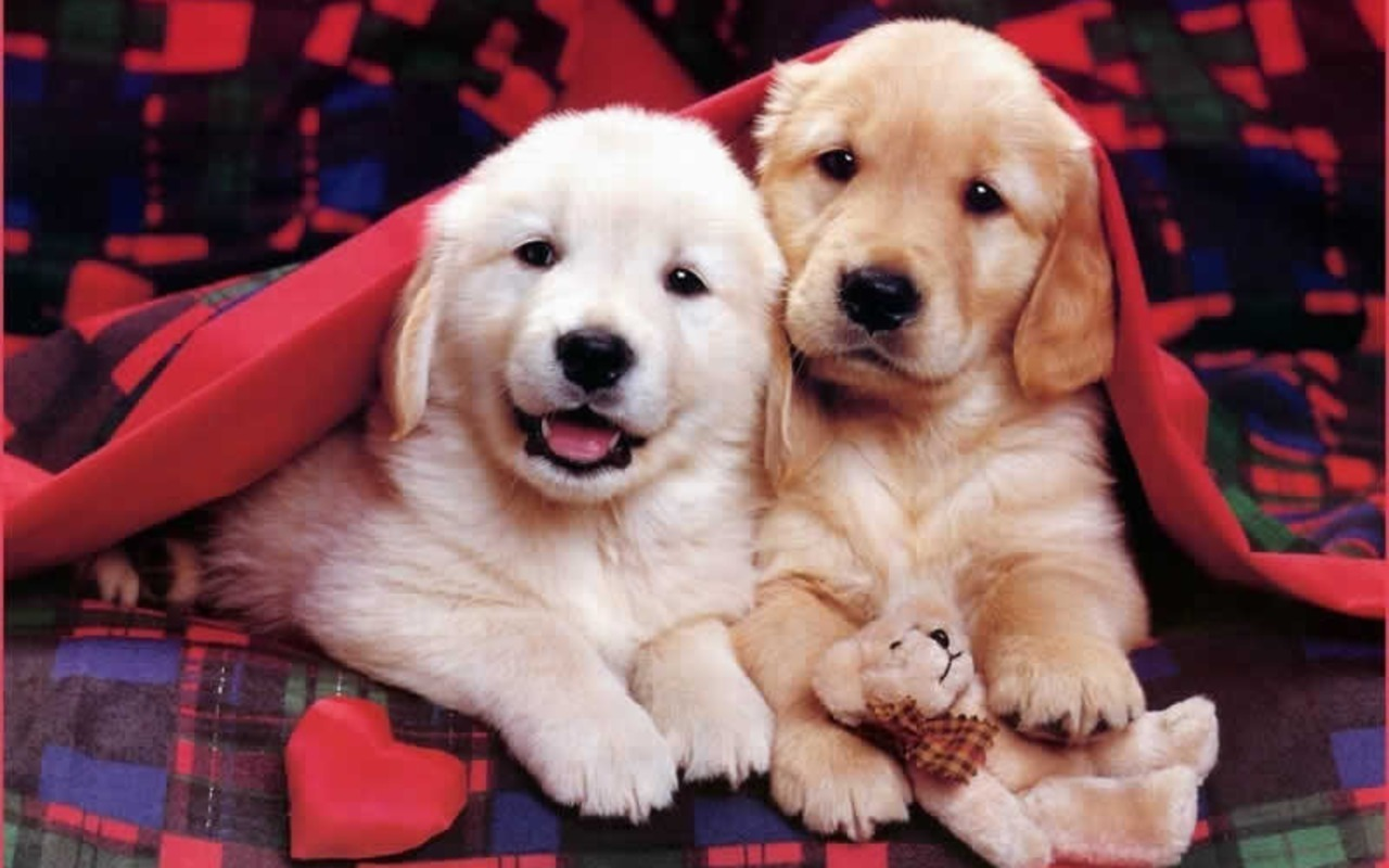 Cute Puppies Wallpapers Download 1 1280x800