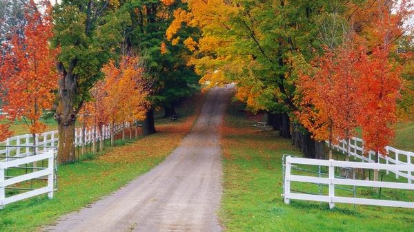 season nature autumn season world roads michigan 1920x1080 wallpaper 600x337