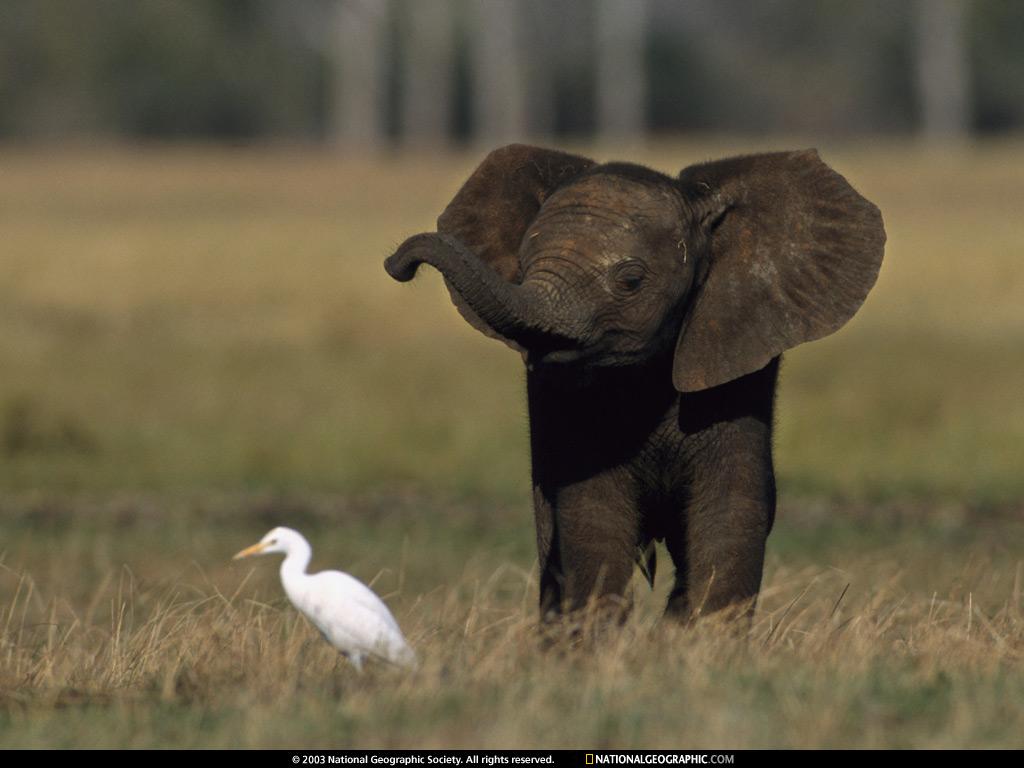 Baby Elephant Africa 1996 1024x768