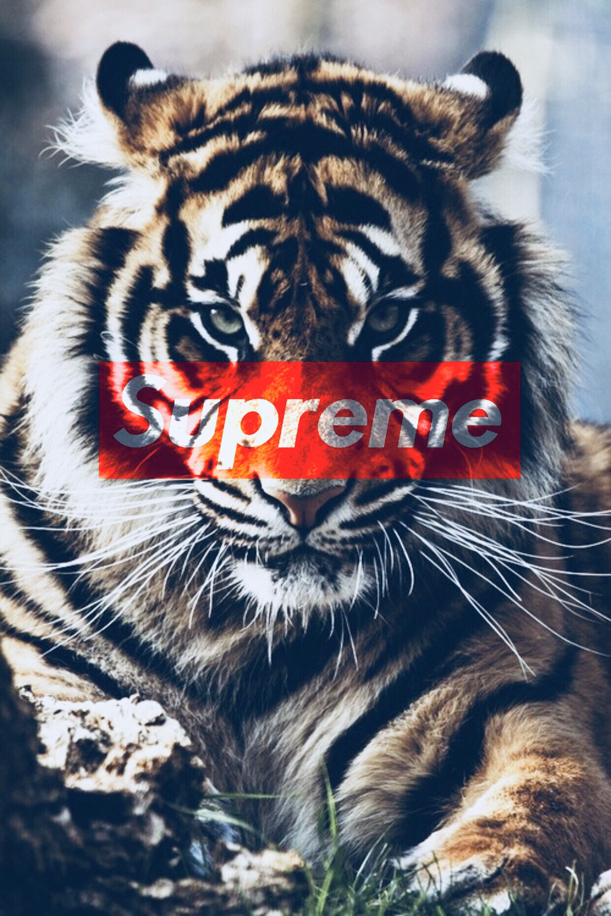 48 Tiger Iphone Wallpaper Supreme On Wallpapersafari