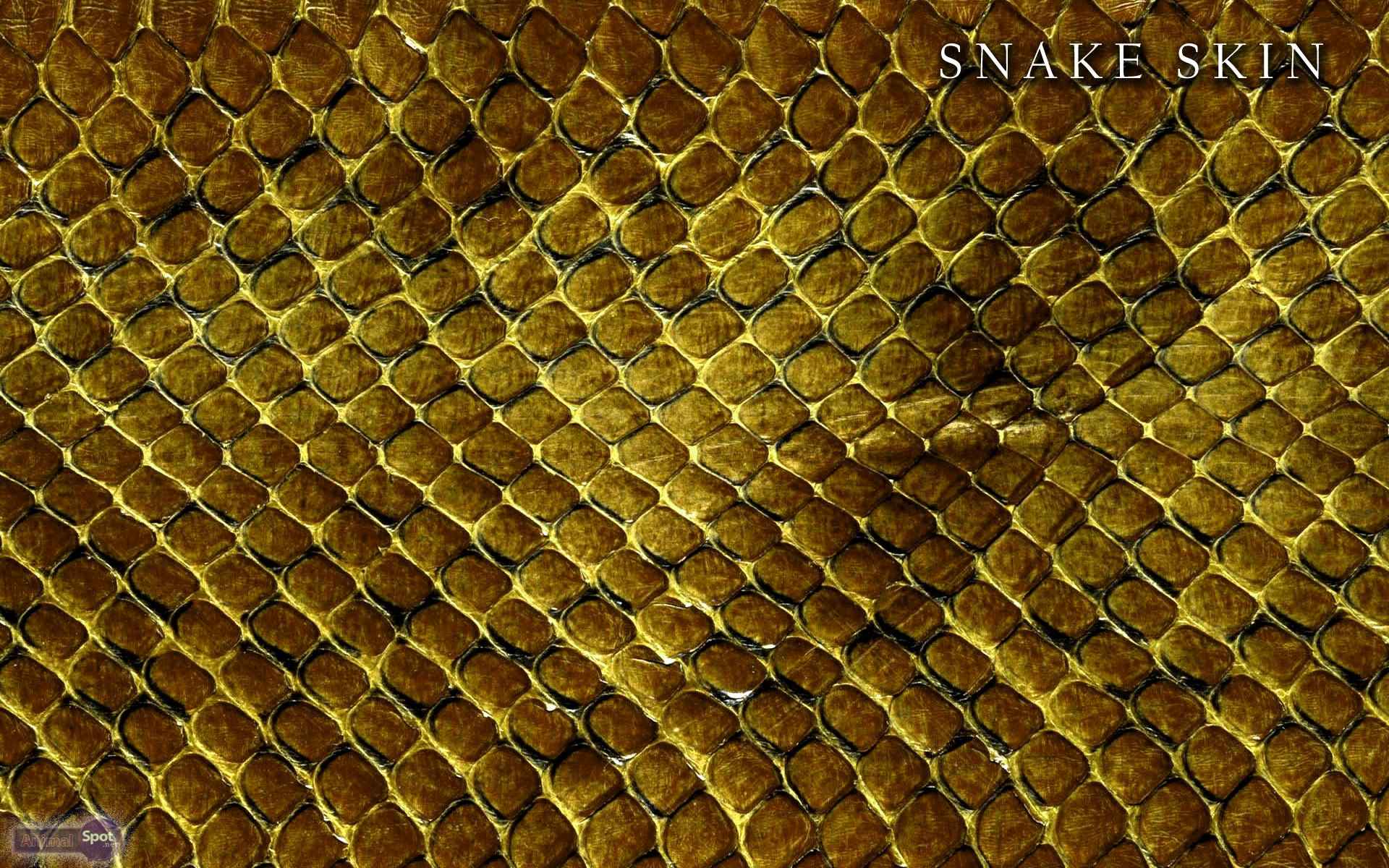 Snake Wallpapers Animal Spot 1920x1200