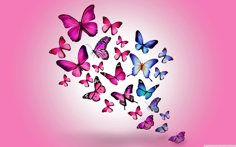 Butterflies 4K HD Desktop Wallpaper for 4K Ultra HD TV Wide 2880x1800