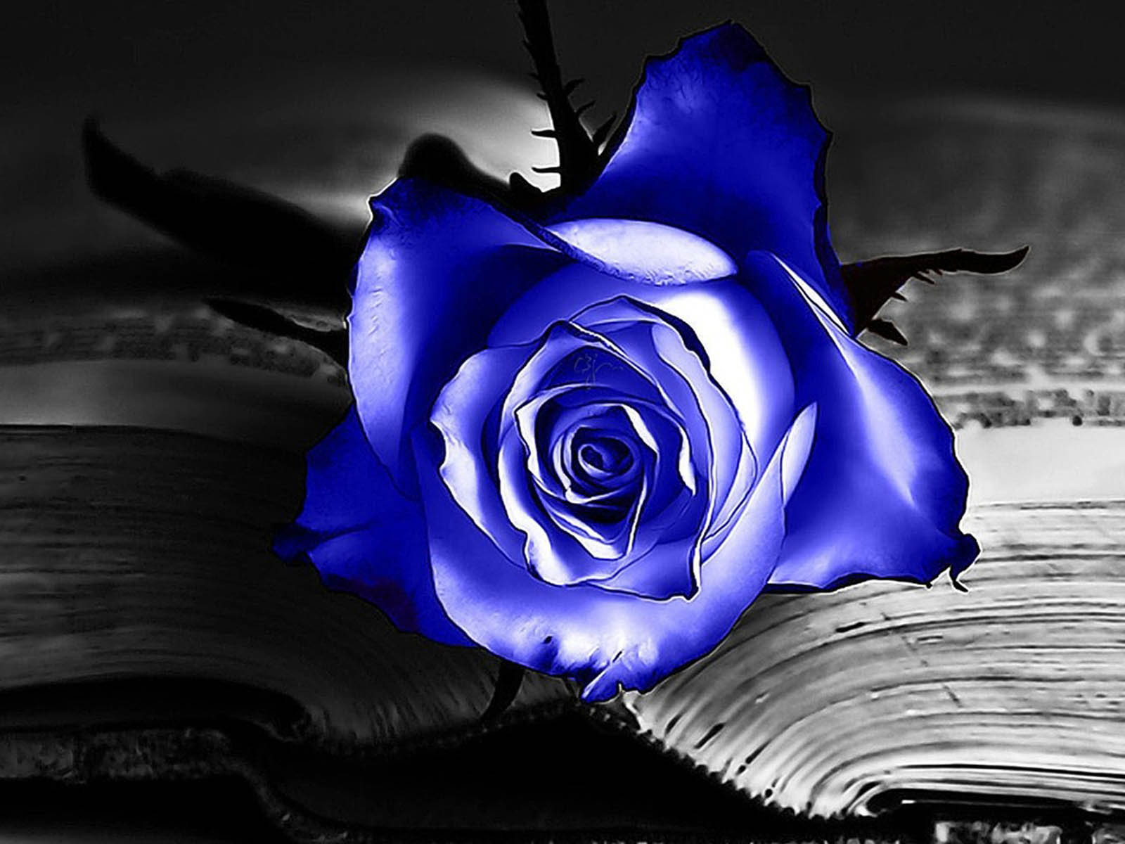 50+] Blue Roses Wallpaper Images on