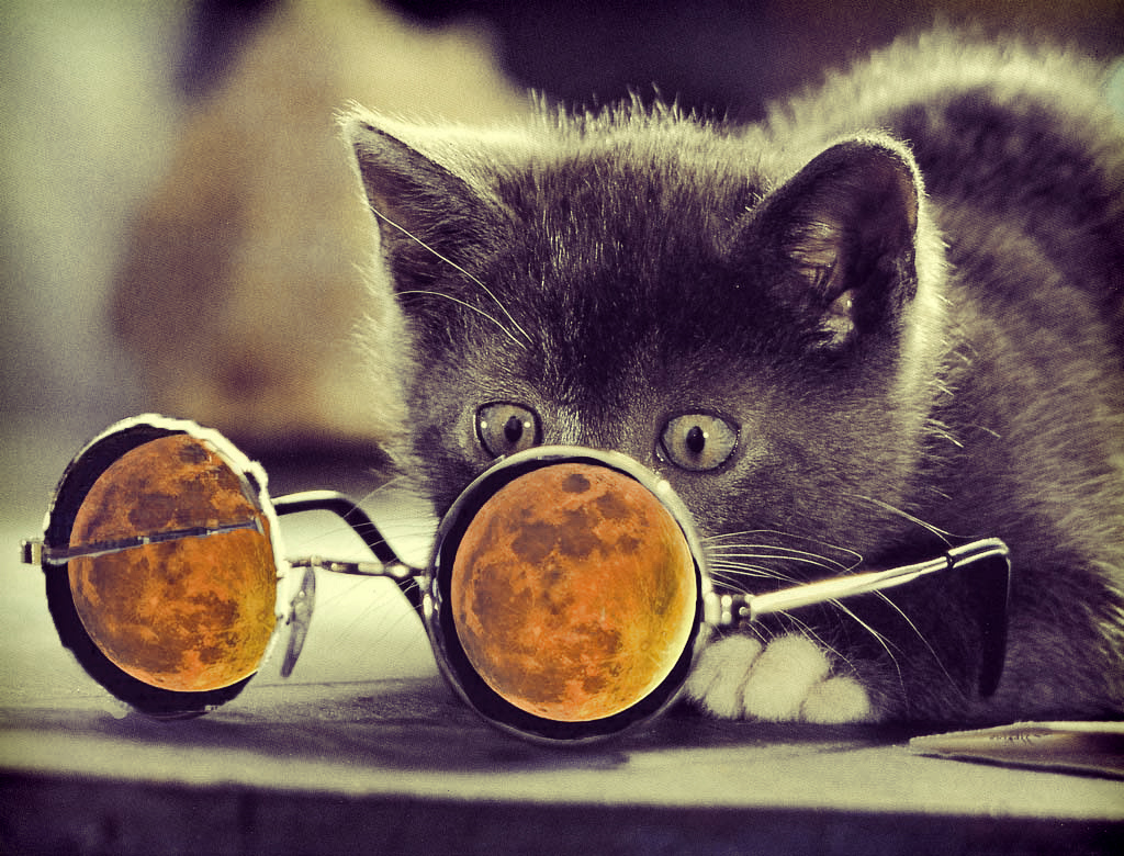 Funny Glasses On A Black Cat