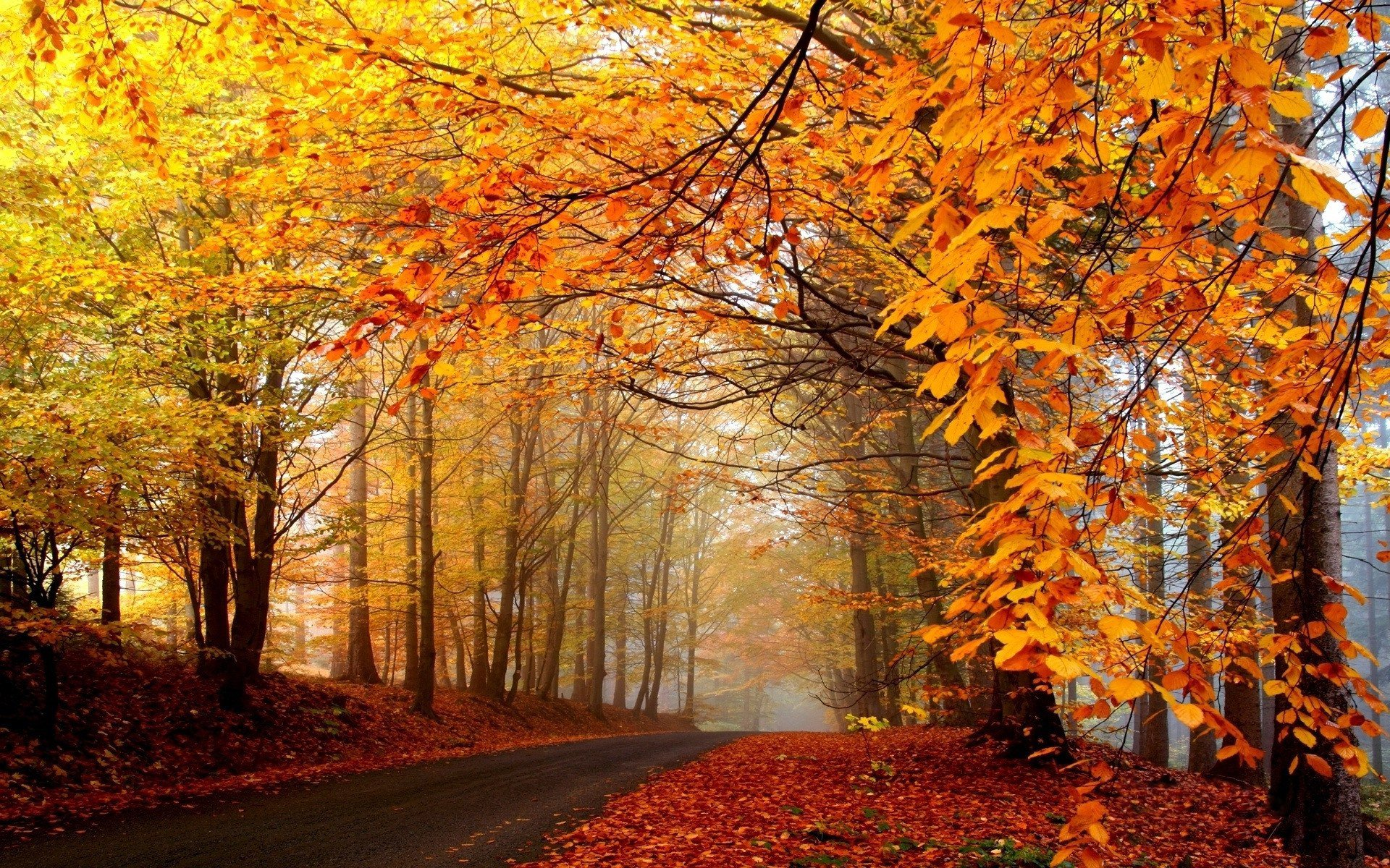 Autumn Tumblr Background Fall Pictures 1920x1200