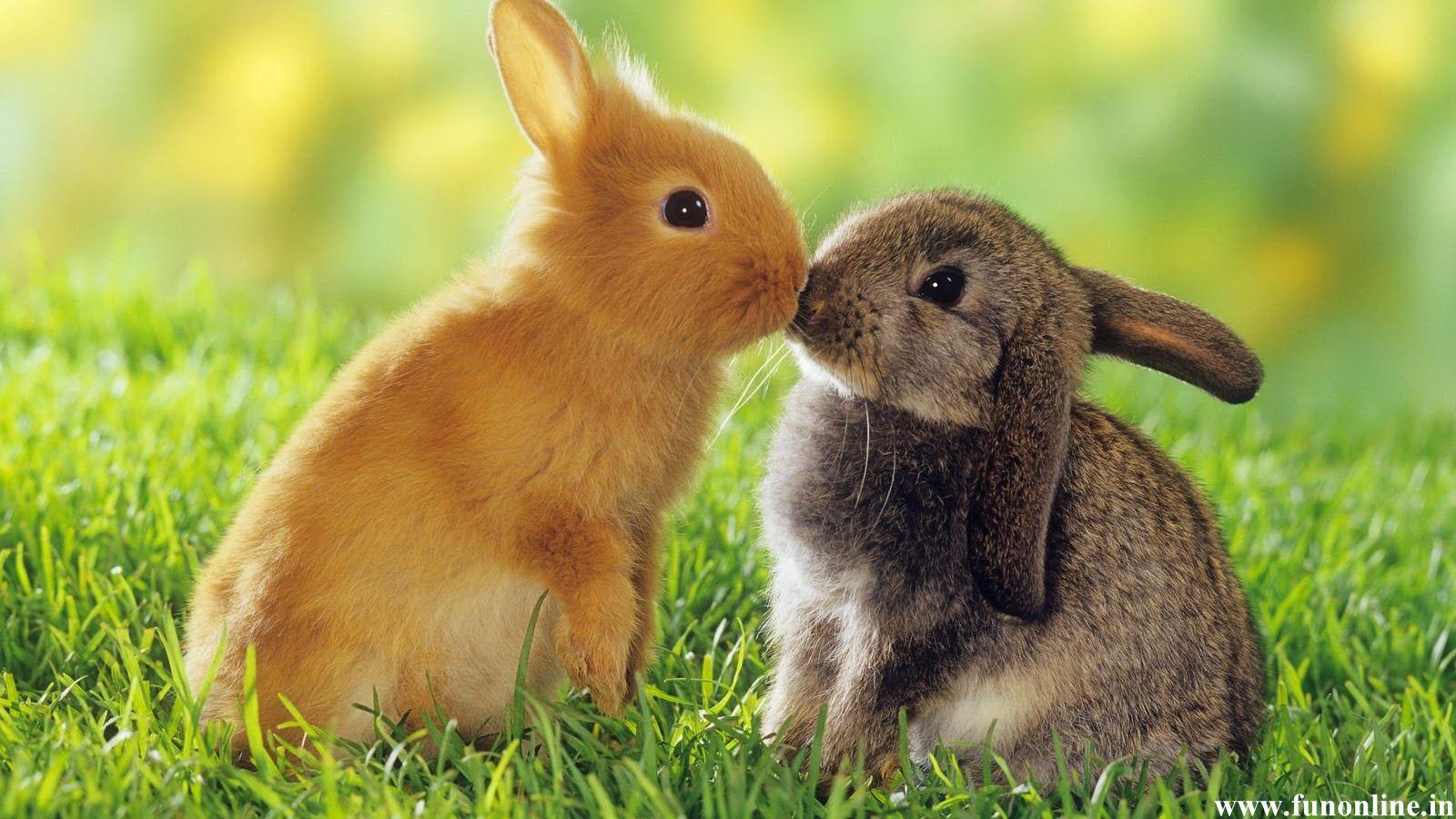 Cute Bunny Rabbits Wallpapers   Top Cute Bunny Rabbits 1600x900