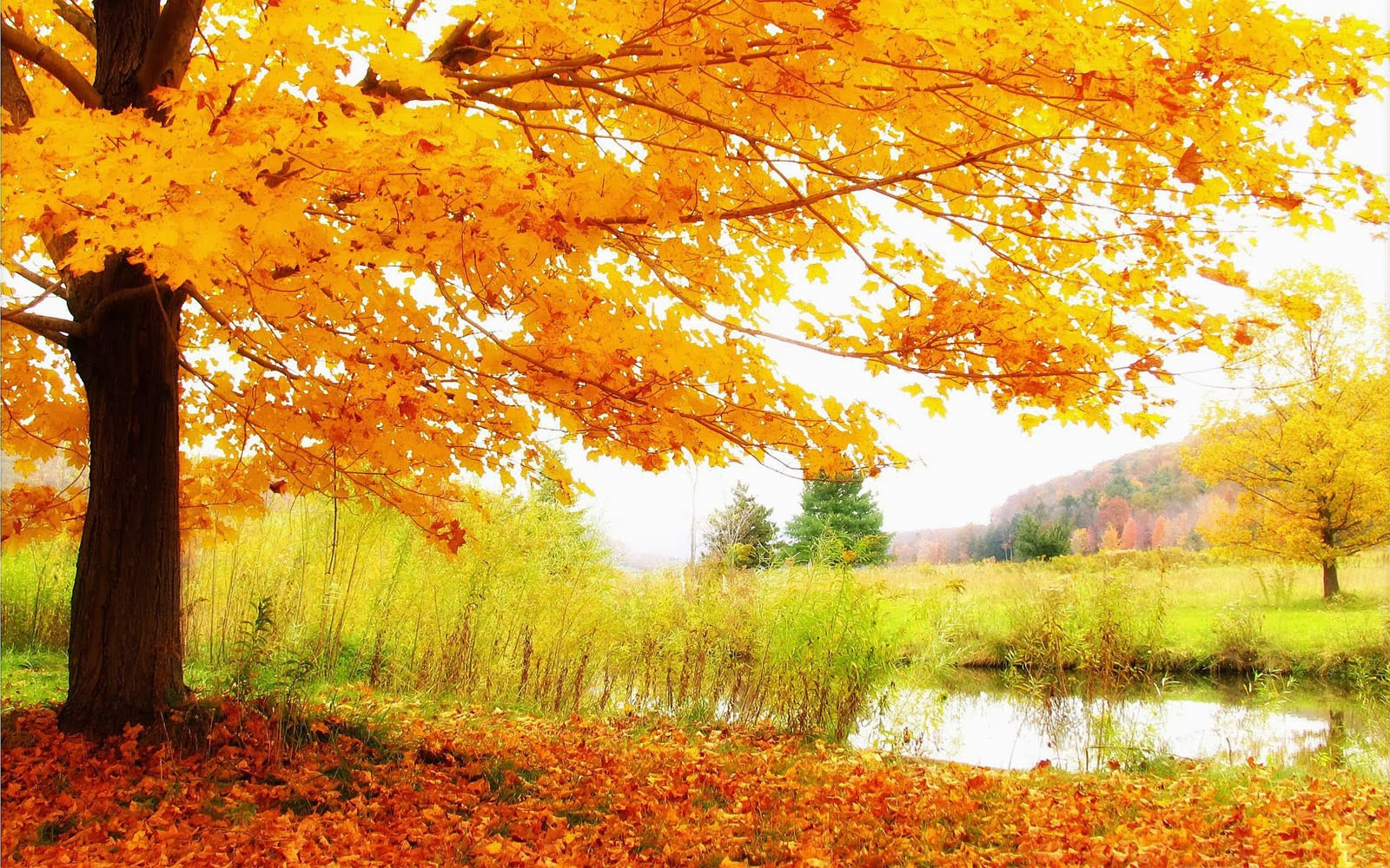 wallpapers Autumn Scenery Desktop Wallpapers 1600x1000