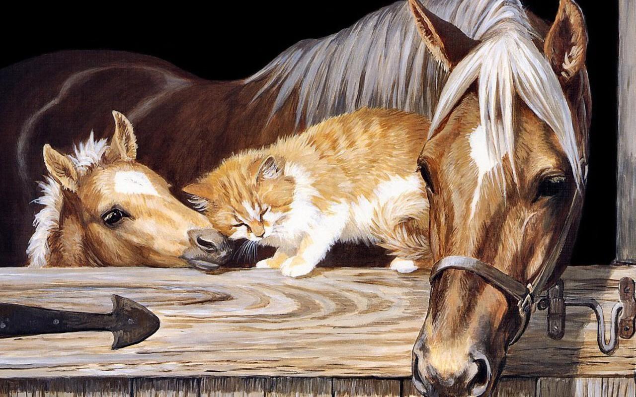 Beautiful Horse   Horses Wallpaper 22410542 1280x800