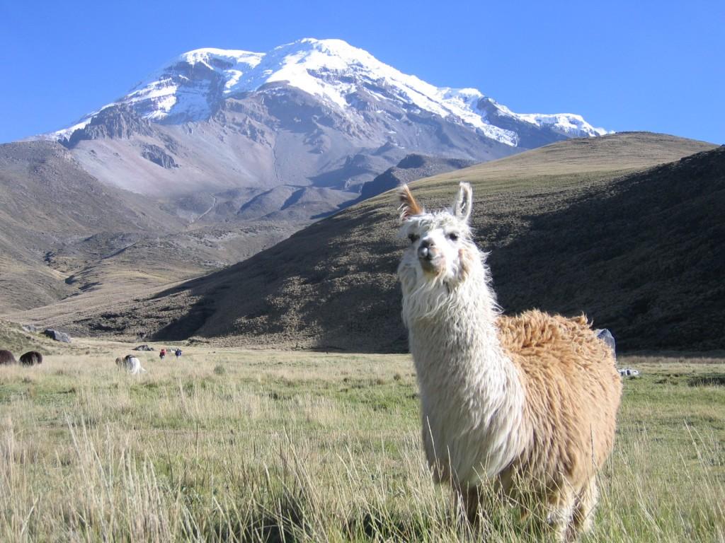 Llama Mountain Scenery   Natures Wallpapers 1024x768