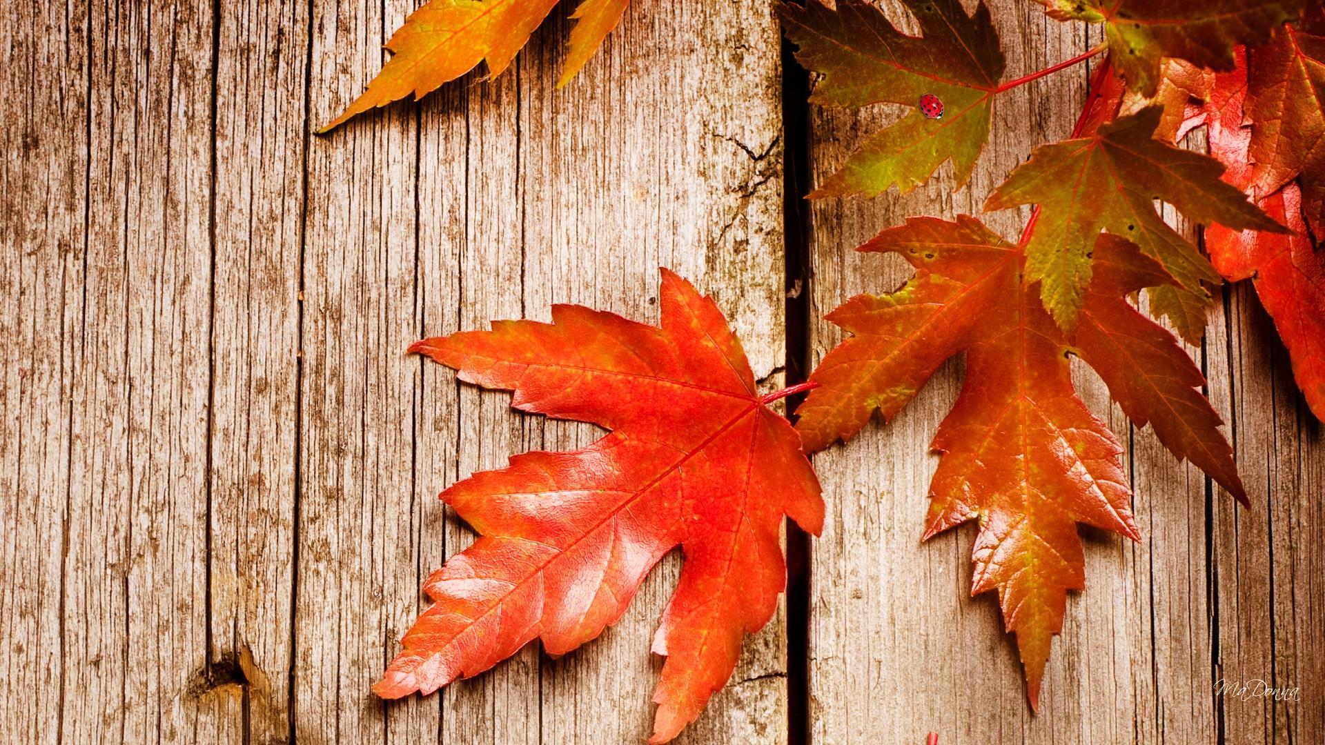 Rustic Fall Wallpapers   Top Rustic Fall Backgrounds 1920x1080