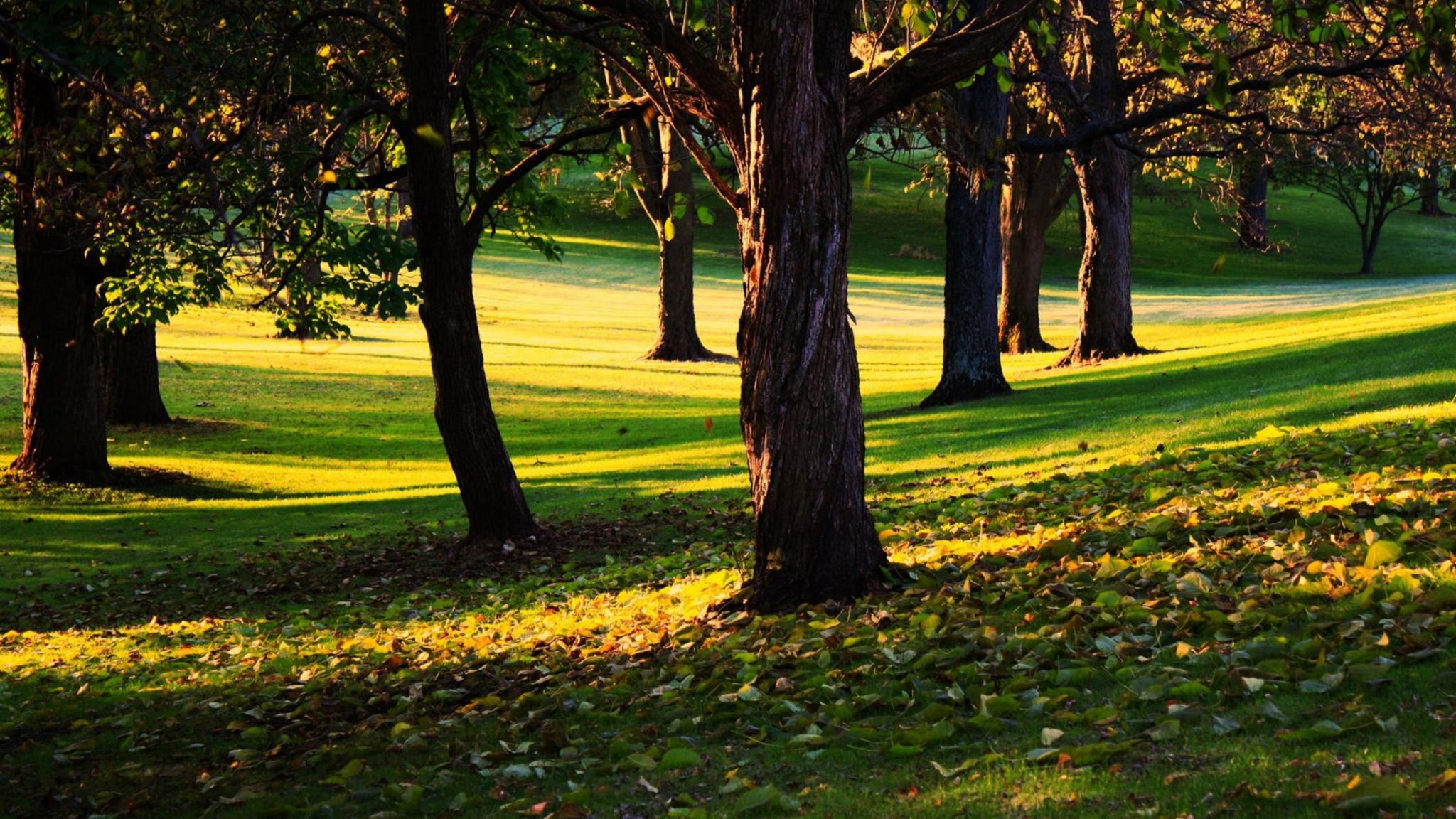 2048 x 1152 wallpaper http wallpaperstagnet view trees 2048x1152 2048x1152