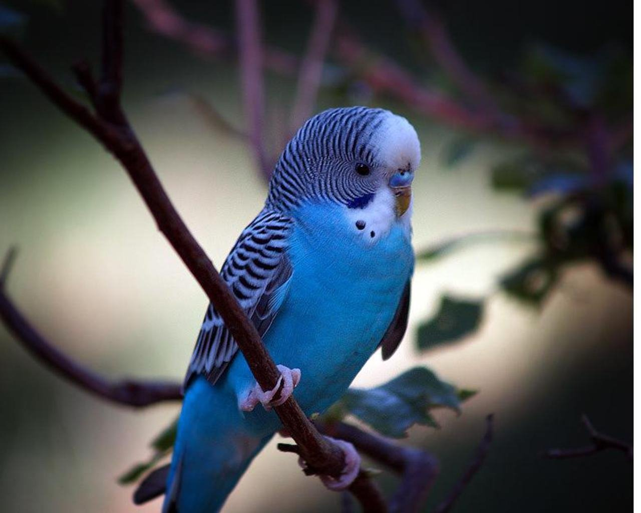 single blue bird wallpaper blue bird sitting around flowers wallpaper 1280x1024