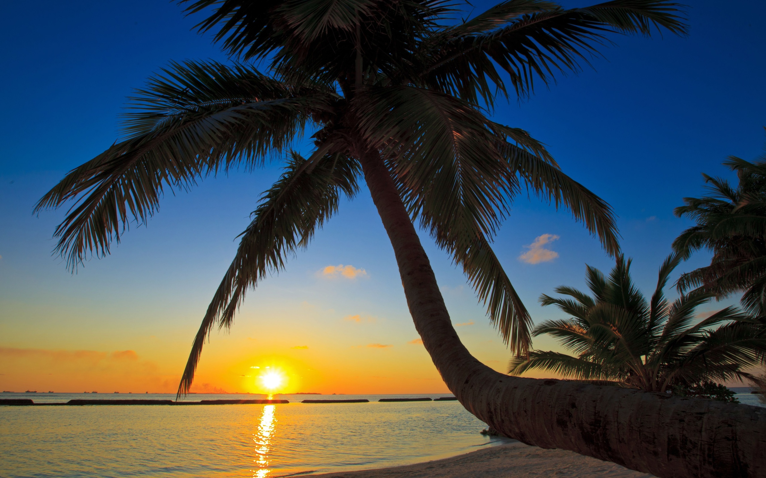Sunset sea palm trees beaches wallpaper 2560x1600 74863 2560x1600