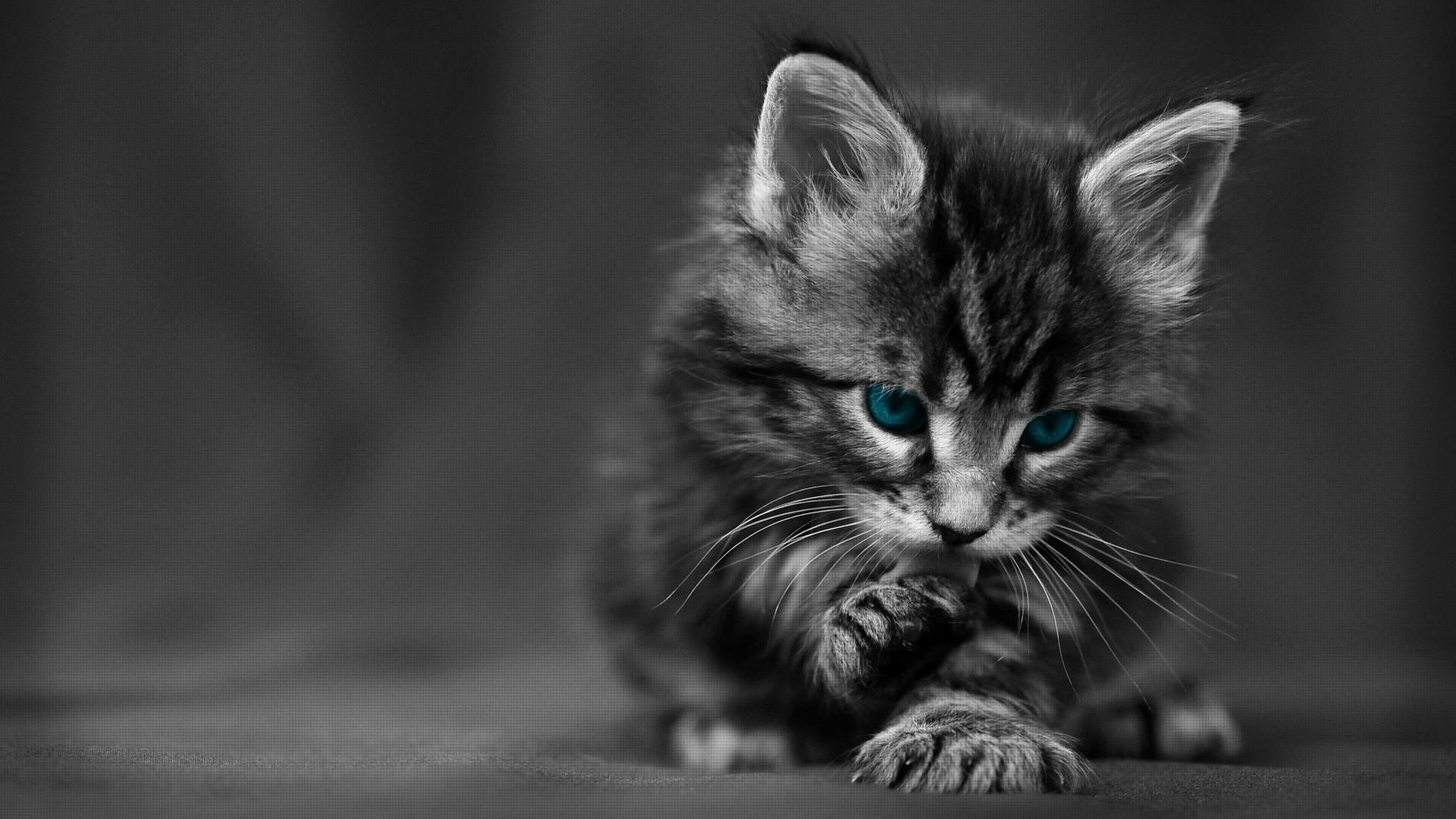 Cute Black Cat HD Desktop Wallpaper HD Desktop Wallpaper 1920x1080