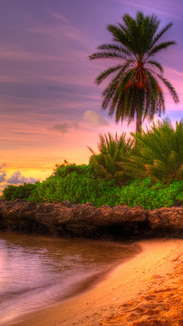 Beach Sunset Tropical Island iPhone 6 Wallpaper iPod Wallpaper HD 750x1334