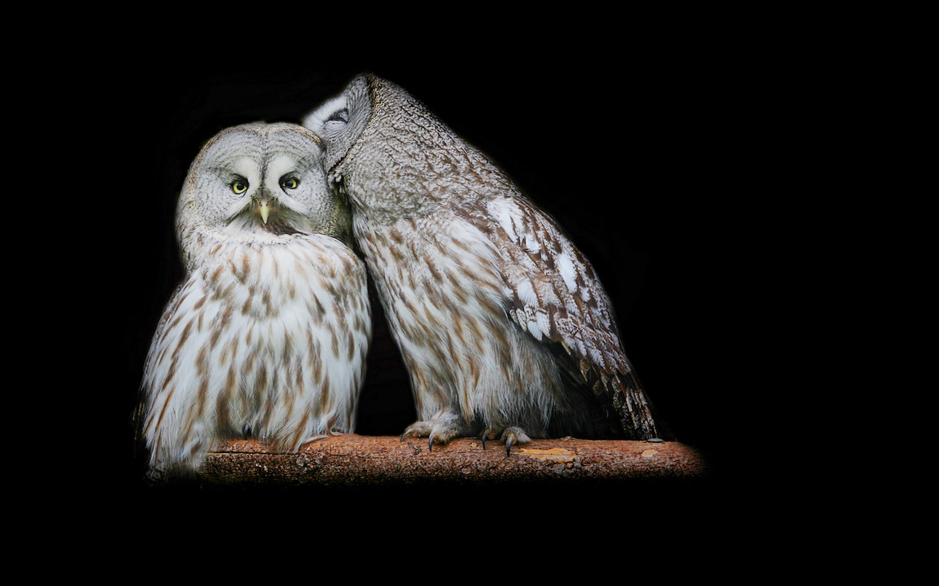 ipad inspired owl wallpapers background baltimore wallchan 1920x1200