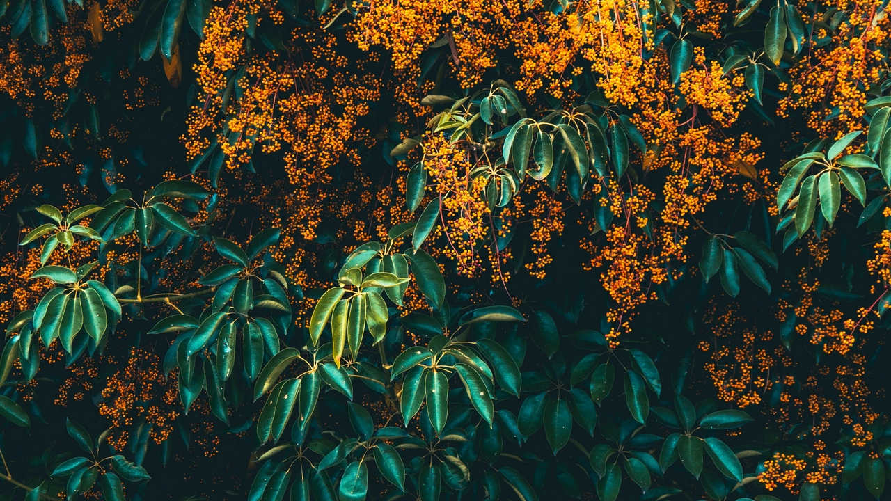 i use this plant like my wallpaper but i cant recognize whats 1280x720