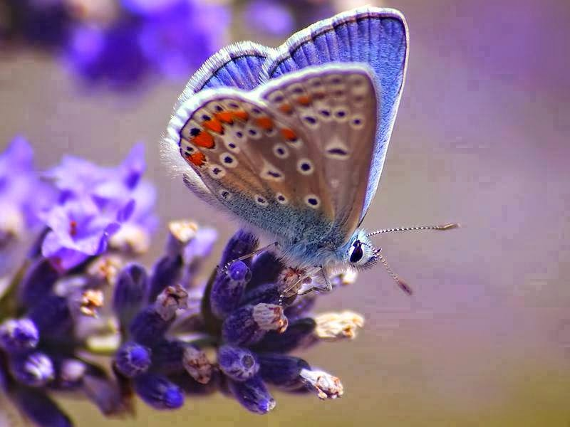 Cute Butterflies pictures download Beautiful Butterflies 800x600