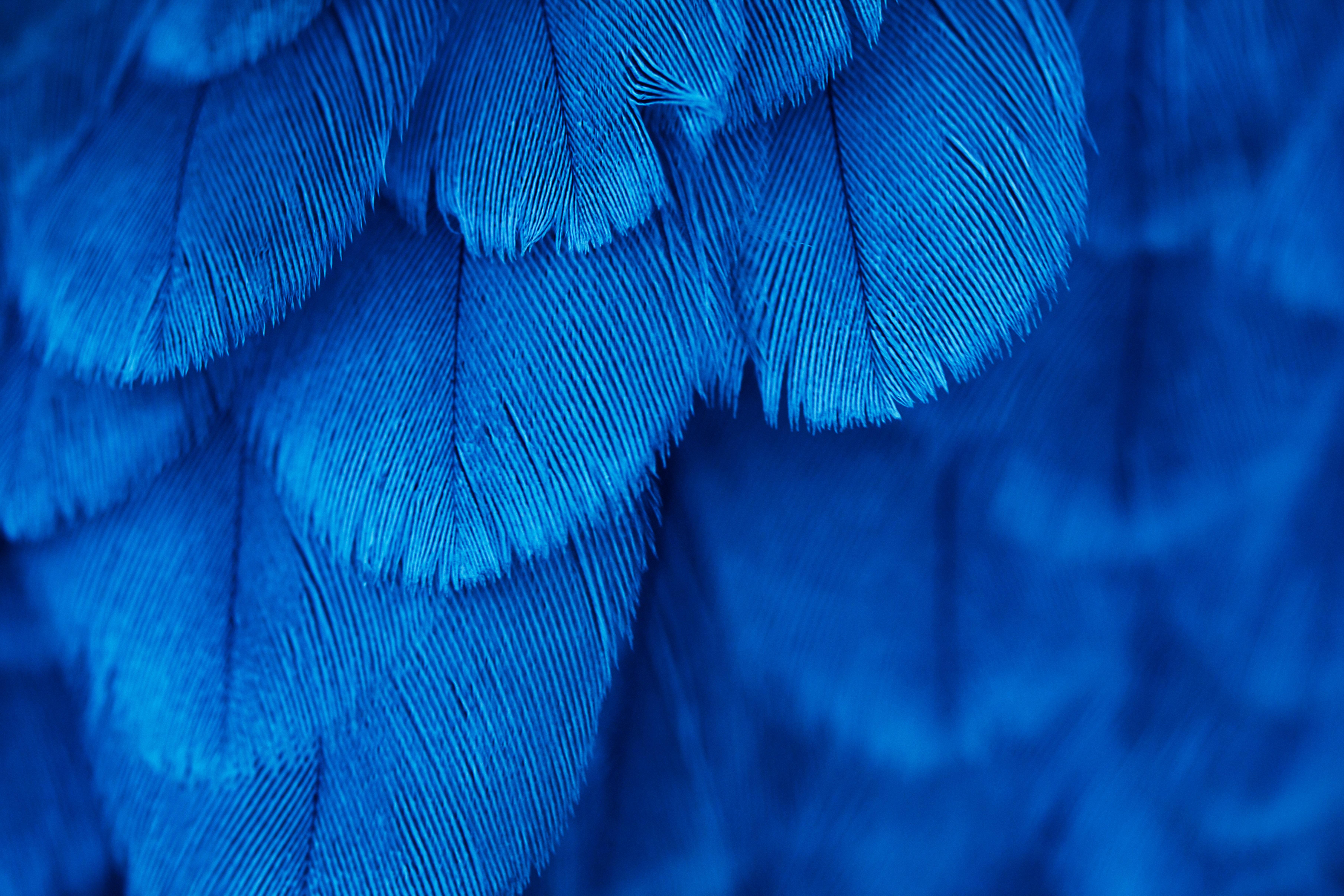 Desktop Wallpapers Blue Feathers Closeup 7240x4826 7240x4826