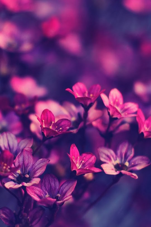 Free Download Perfect Purple Flowers Iphone Wallpaper Iphone