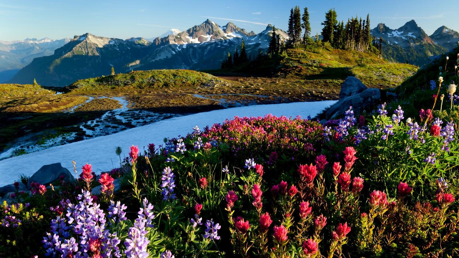 Amazing World Photos Amazing Nature 1600x900
