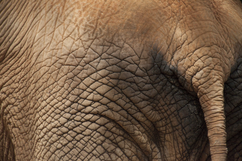 Download image Elephant Skin PC Android iPhone and iPad Wallpapers 800x533