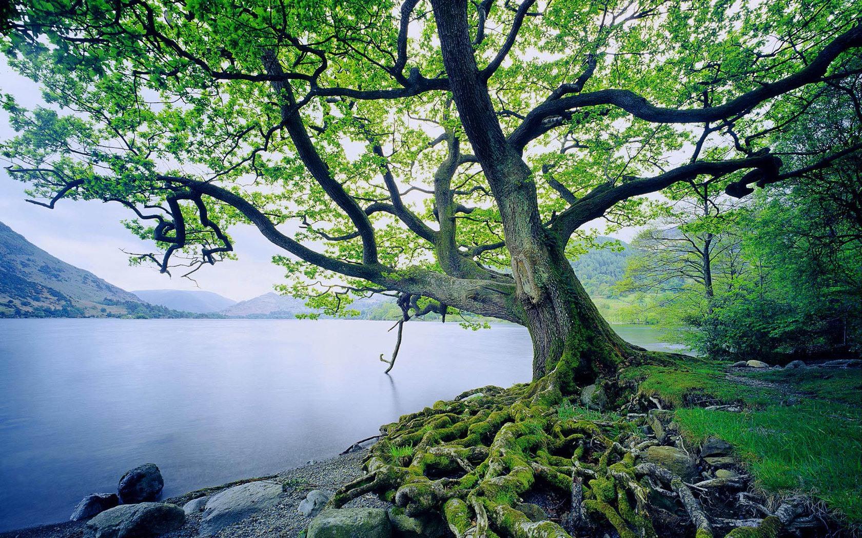 Beautiful Tree and River desktop wallpaper 1680x1050