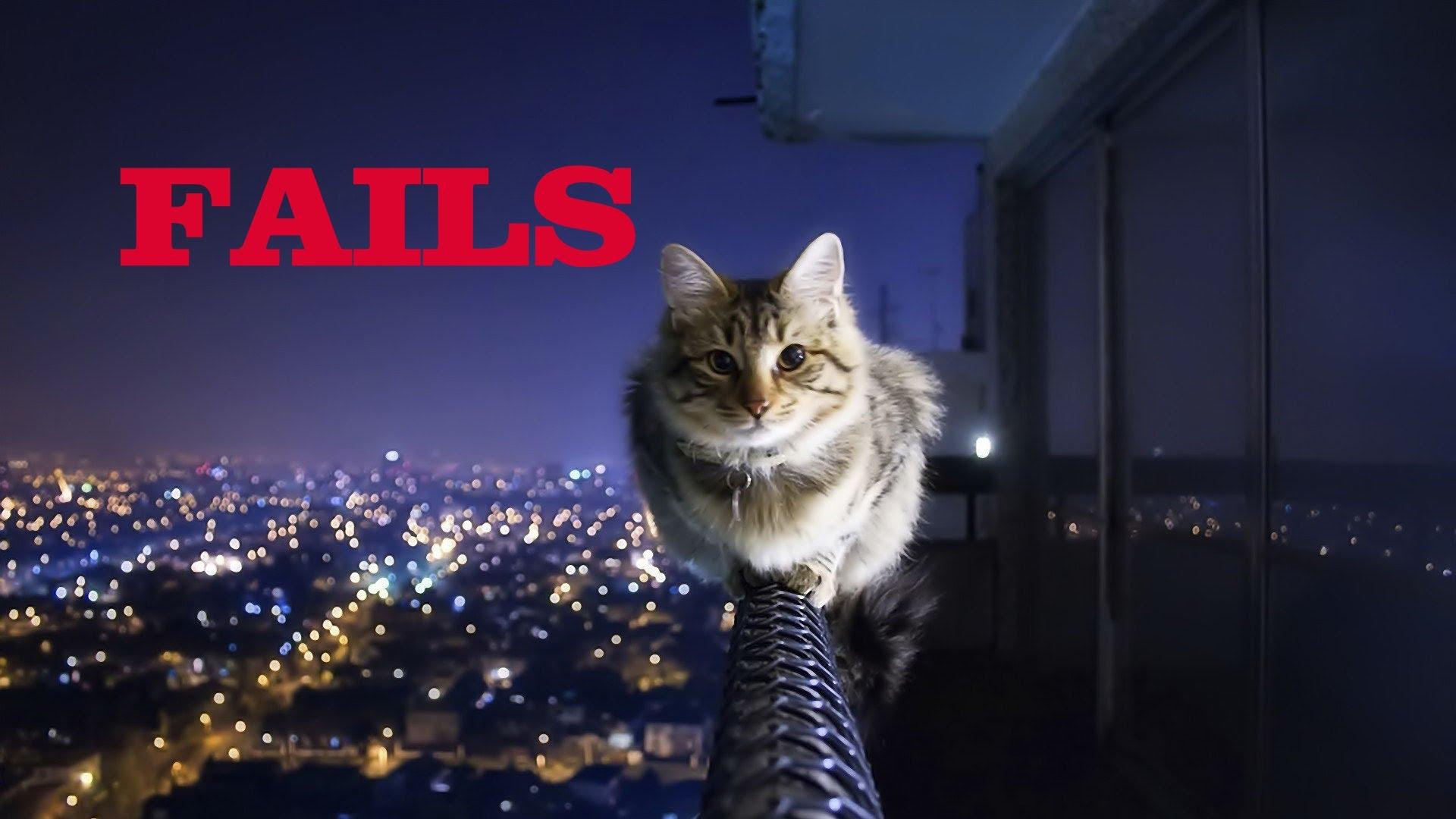 Epic Funny Cat Fails 1 Cool Wallpaper Wallpaper 1920x1080
