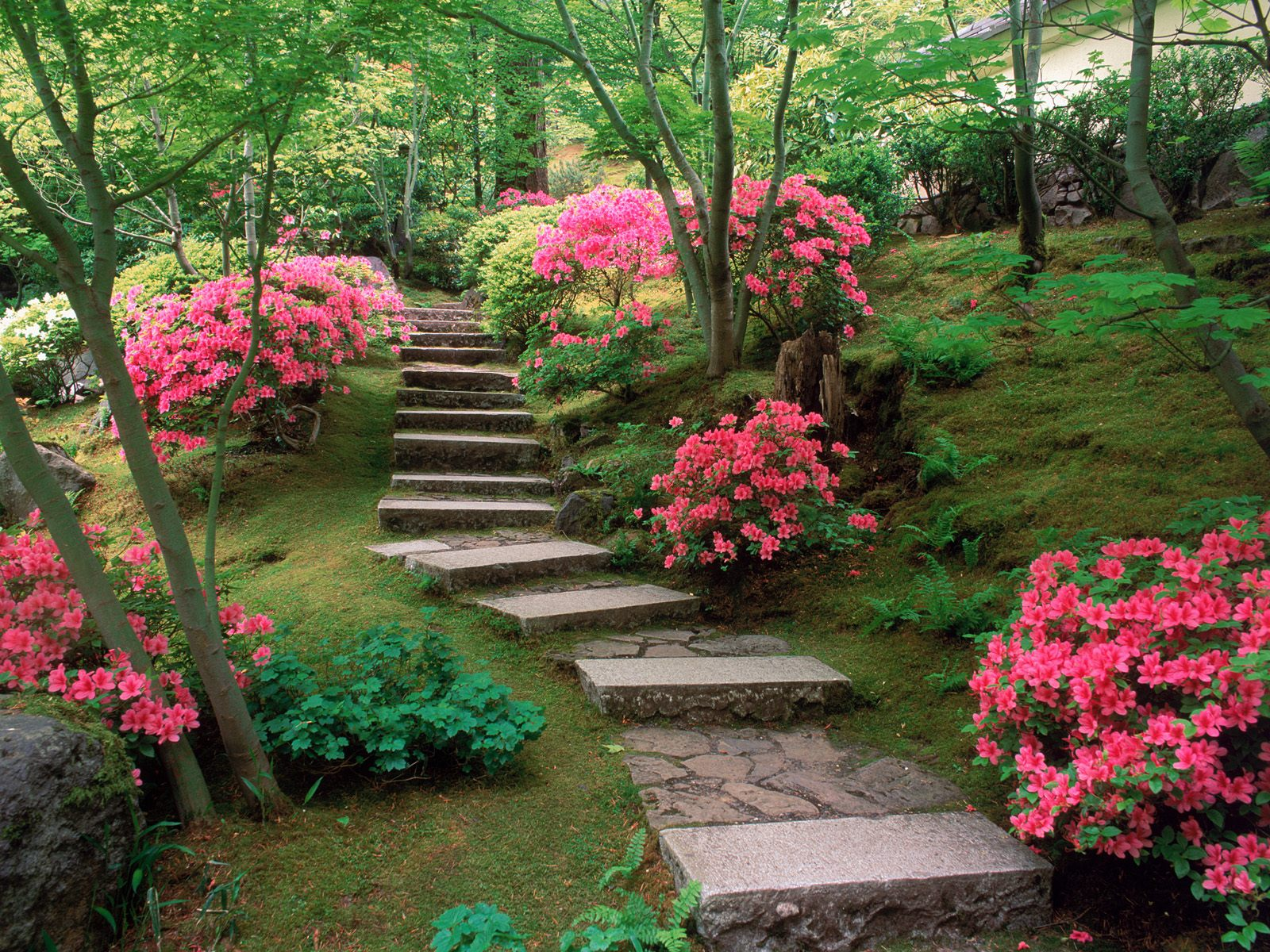 azaleas japanese garden normal Japanese gardens 1600x1200