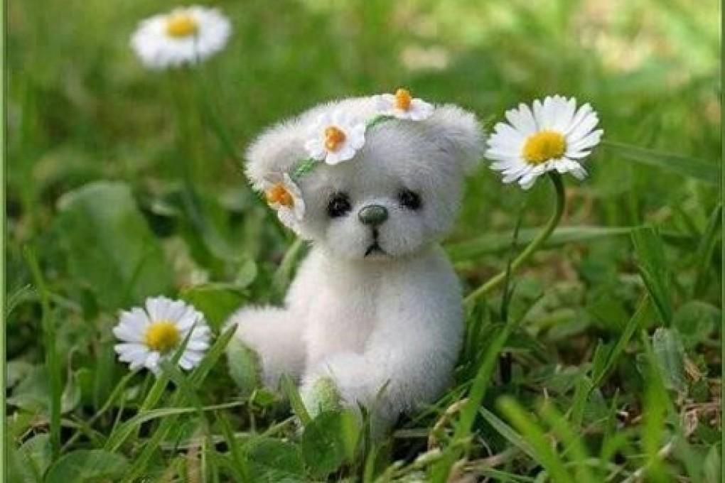 75 Cute Puppy Wallpapers For Desktop On Wallpapersafari