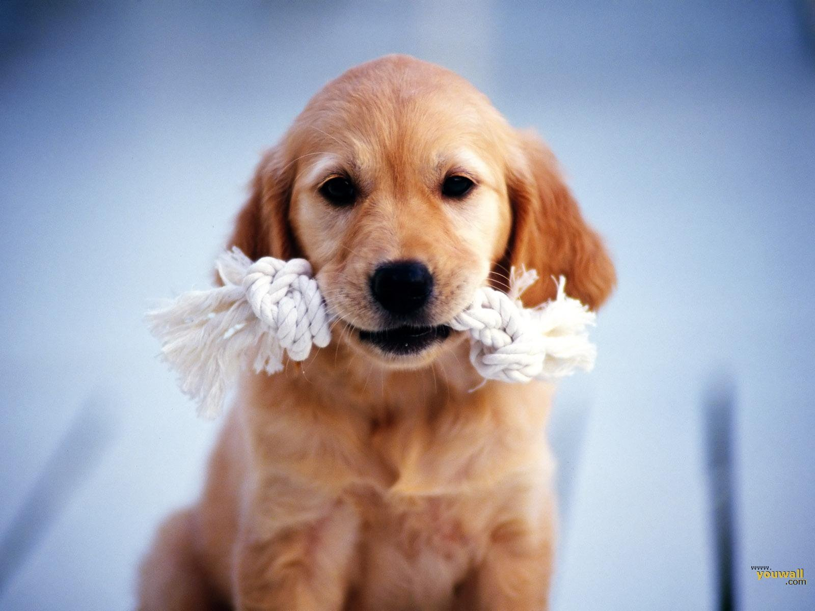 download All Wallpapers Beautiful Dog Hd Wallpapers 1600x1200