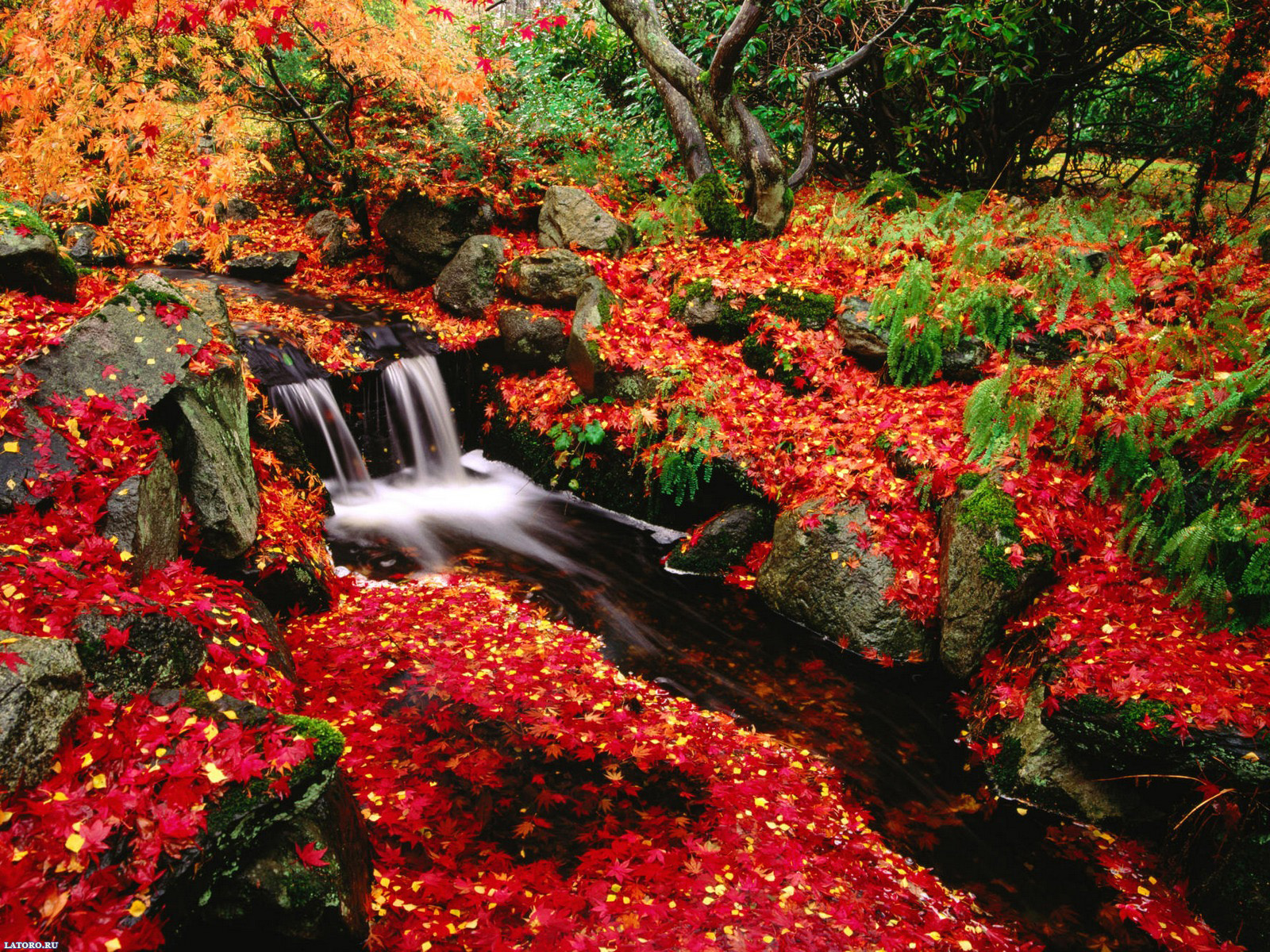 httpwwwzwdzjscomphotofree fall desktop wallpaper downloadshtml 1600x1200