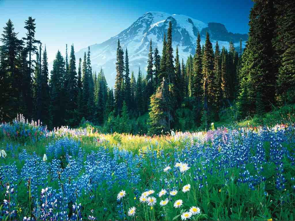 Fabulous Nature Wallpapers Desktop Best Wallpaper Background 1024x768