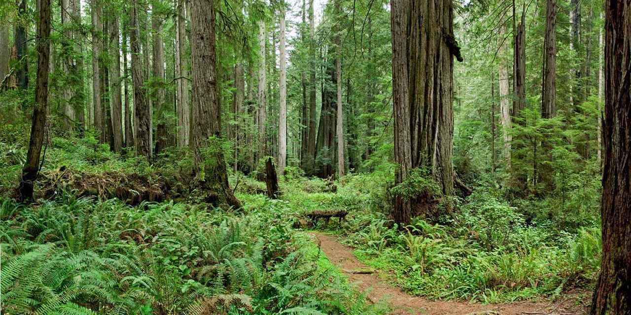 Spotlight Redwood National State Parks Visit California 1280x640