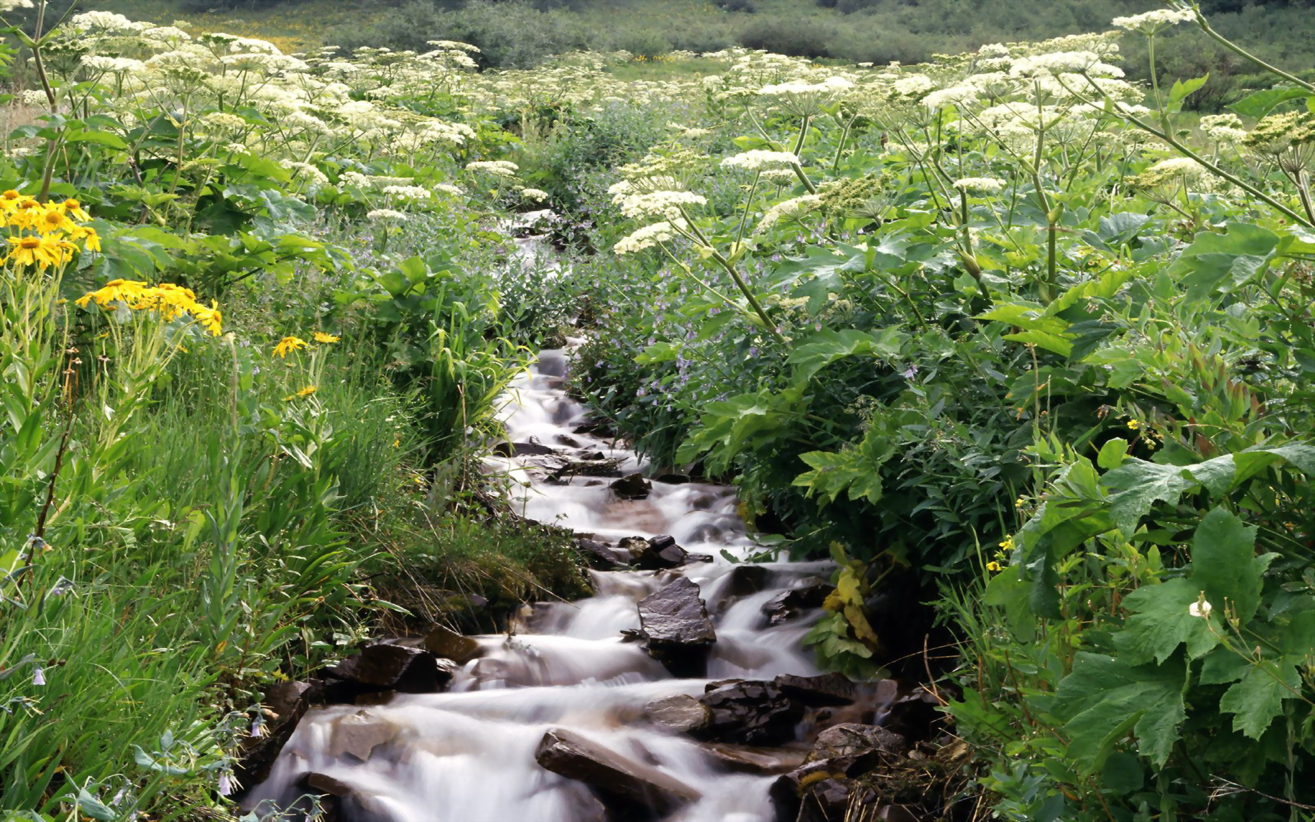 Wildflowers Border a Mountain Stream White River National Forest 1920x1200