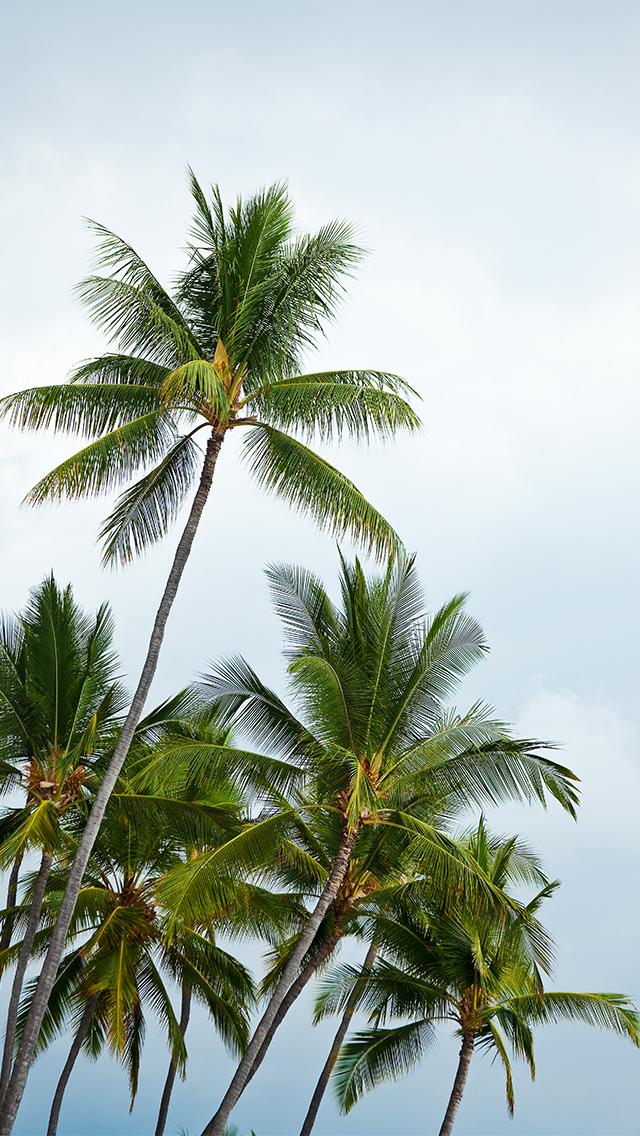 palm tree iphone wallpaper wallpapersafari