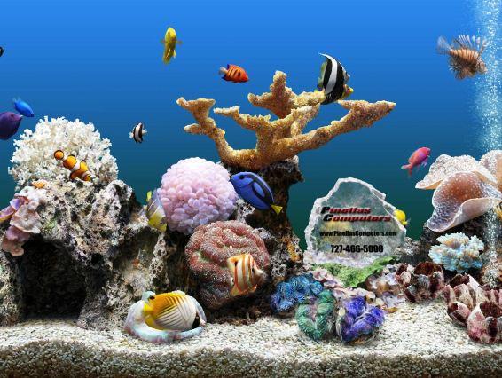 Fish Aquarium Backgrounds Computer Images Pictures   Becuo 566x426